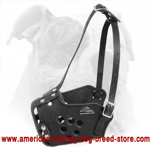 Leather American Bulldog Muzzle