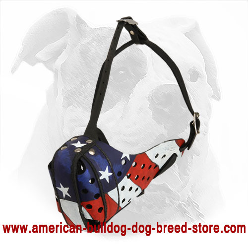 Training Leather American Bulldog Muzzle