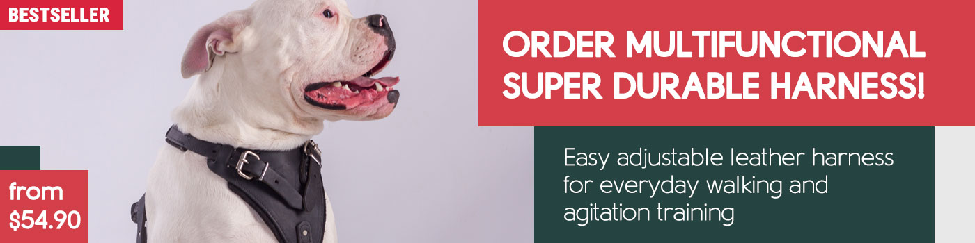Best Agitation Harness for American Bulldog