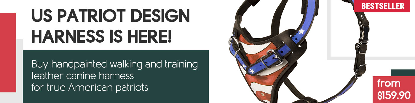 American Bulldog Leather Agitation Harness Handpainted with the Symbols of the USA Flag